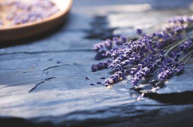Lavender DrH